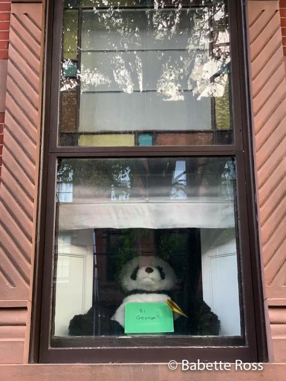 Teddy Signs