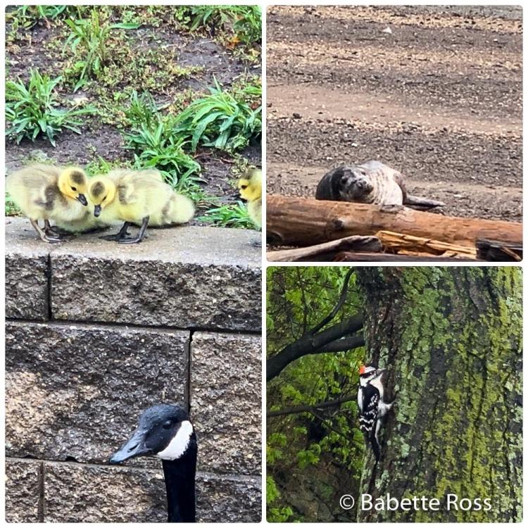 Hoboken Wildlife