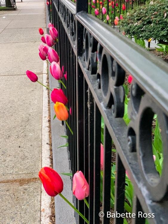 Tulip Escape