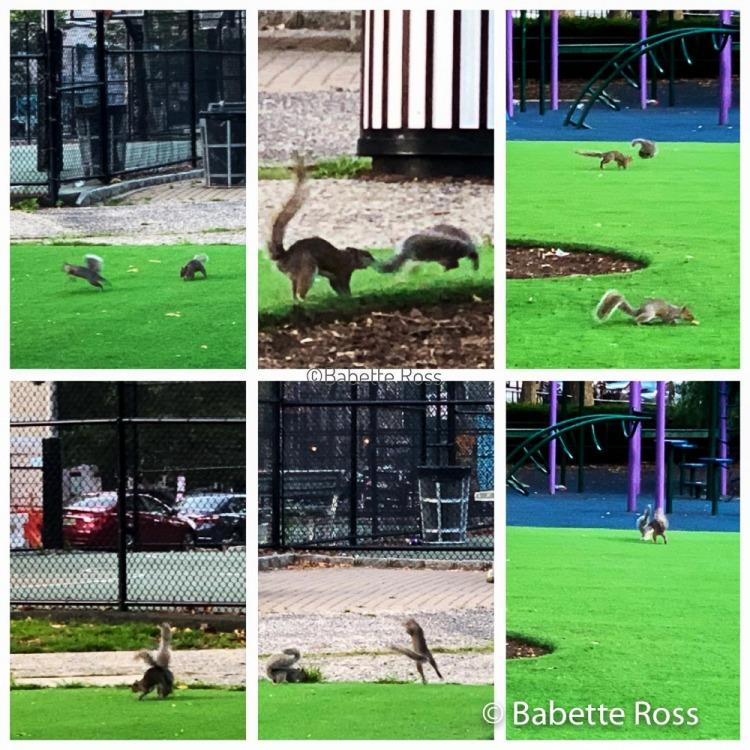 Squirrel Shenanigans