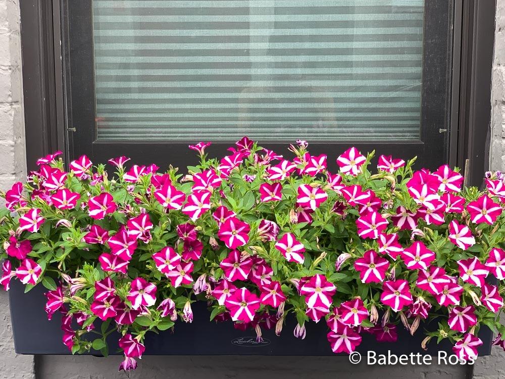 Happy Flower Box