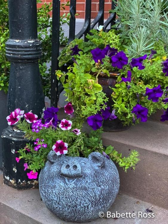 Petunia has Petunias