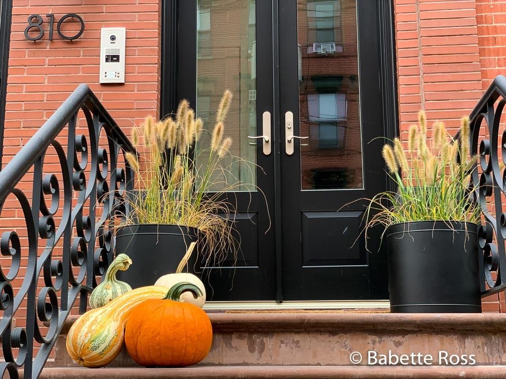 Autumnal Display