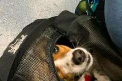 Peek a Boo Pup on the Path
