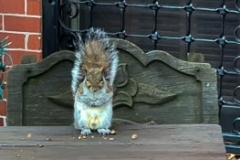 Squirrel knows I'll stay 6ft away