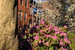 11th Street Garden