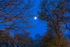 Moonset in Blue Light