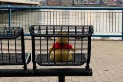 Lost Winnie The Poo