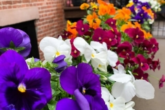 Flower Boxes in Bloom
