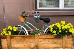 Where Can I Buy Bicycle Seeds?