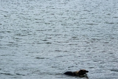 Puppy Swim