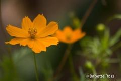 Explorama Lodge - Ciba Tops - Flowers