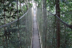 Explorama Lodge - Canopy Walkway