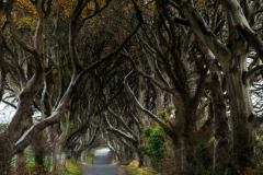 "County Antrim, Stranocum, ""The Dark Hedges"""