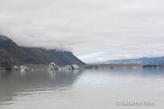 Icebergs on Tasman Glacier Lake