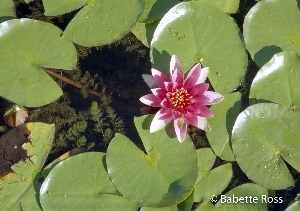 Botanical Garden Munich 1994-08-27