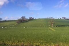 Sheep Between Dublin & Belfast