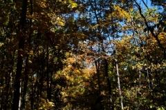 Flat Rock Brook