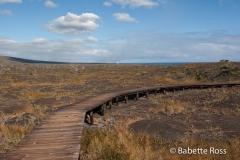 Volcanos National Park Pu'uloa Petroglyphs