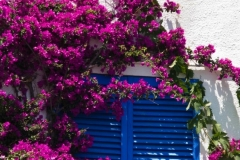 Blue Shutters and a Bunch of Bogainvillea