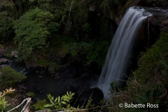 Atherton Tablelands - Zillie Falls