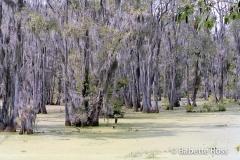 20020909_7-4Magnolia Swamp Garden