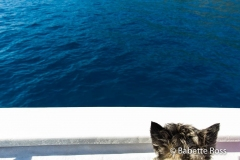 Dog on a Boat 2015-09-07