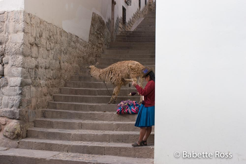 Woman in Traditional Dress, Knitting, With a Llama in San Blas