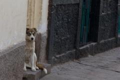 Dog in San Blas