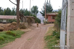 Llama in the Road