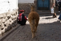 Woman in Traditional Dress with Llama in San Blas