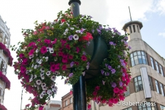 Flowerpot 2008-07-20