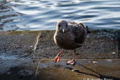 St. Stephen's Green 2013-12-29