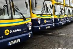 Buses 2015-11-29