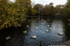 St. Stephen's Green 2018-11-04