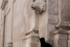 Cat at Church of St Blaise, Dubrovnik 2013-03-17