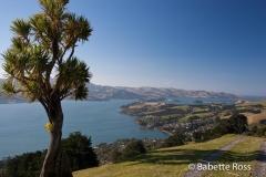 Otago Pennisula