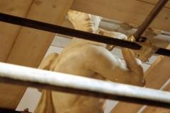 Pallazzo Vecchio 1998-11-13