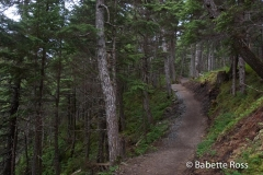 Girdwood Trail