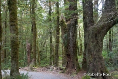 Haast Pass Trails