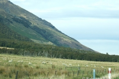 Between Haast Pass & Wanaka