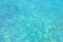 Prince Kuhio Beach