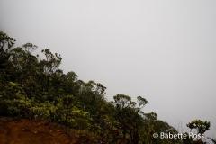 Puu Kila Lookout Hike
