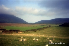 Killarney Sheep 1993-08-31