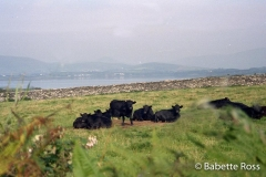 Dingle 1993-09-01