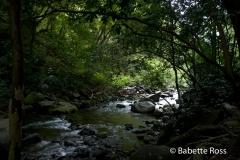 Iao State Park