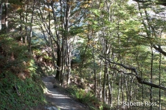 Mt. Aspiring National Park - Rob Roy Valley Track