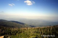 Mt Mitchell,