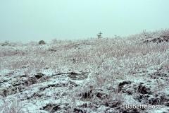 Mt. Moosilauke