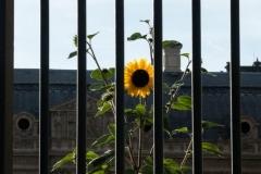 Louvre 2018-09-10